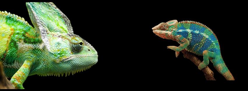 ecovivarium living reptile museum escondido