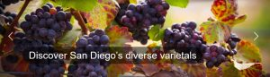 wine and food festival sdcva bernardo winery escondido